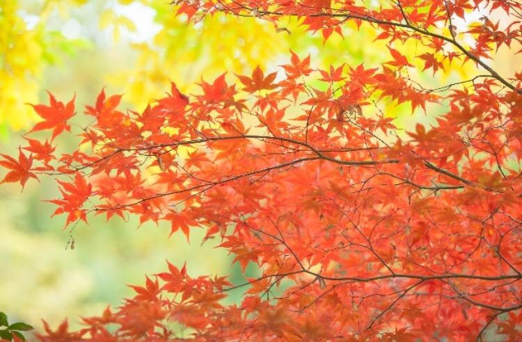 秋月城跡の紅葉の見頃時期2017!駐車場情報と渋滞回避の方法を紹介