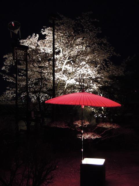 夜桜デートが成功するプランの立て方!モテる持ち物を紹介♪