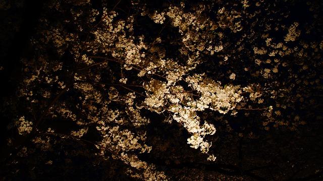 夜桜をスマホで撮影するコツ!綺麗に撮れるアプリもご紹介♪